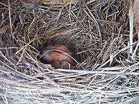 Nest_02