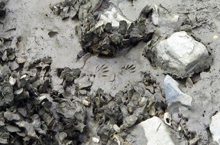 Oysters_feet
