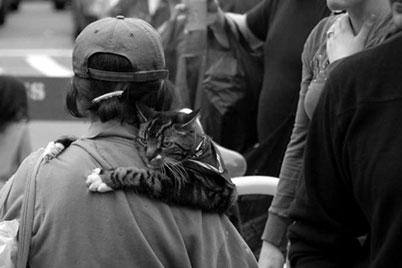 Clingingcat