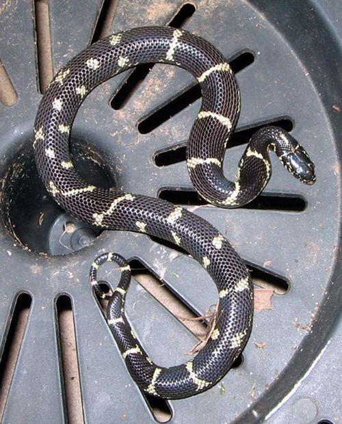 Snake_02