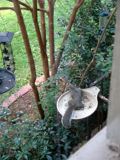 Squirrel_dish_03