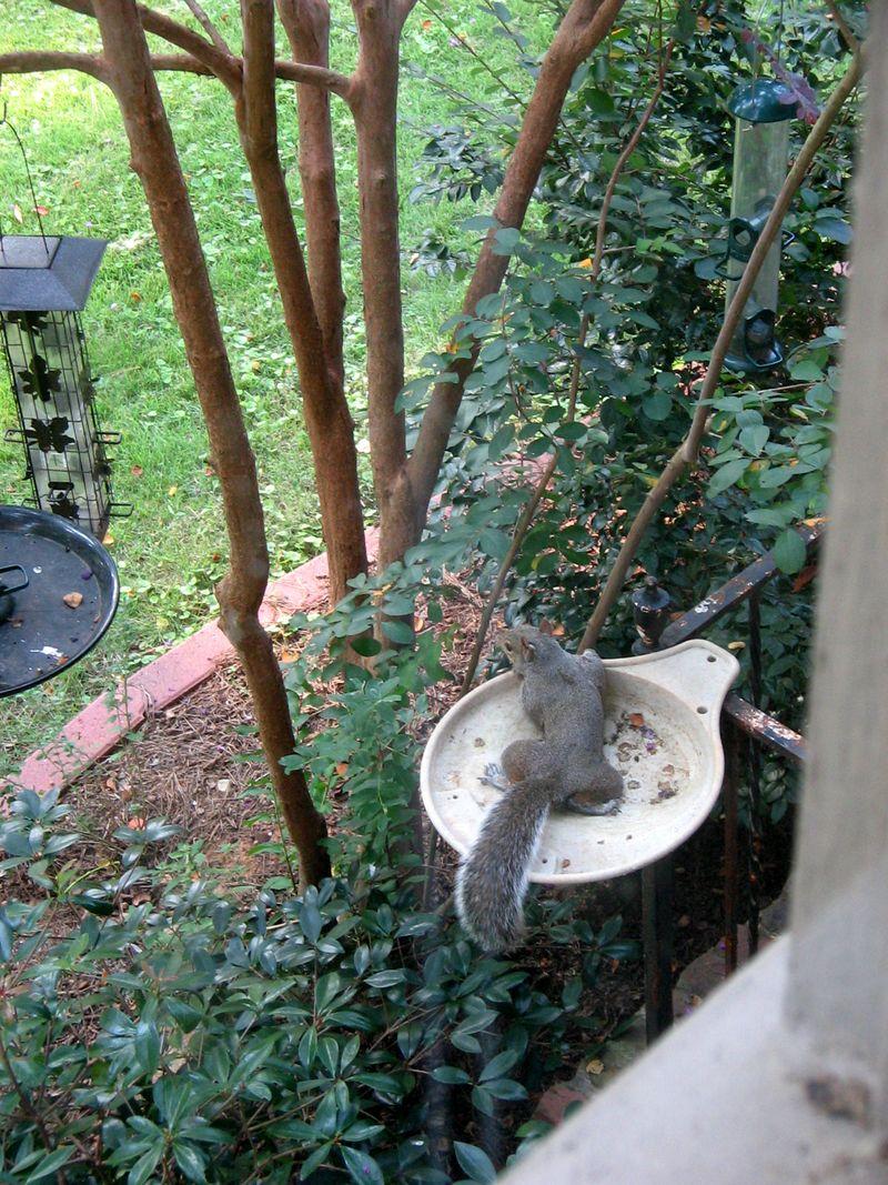 Squirrel_dish_03
