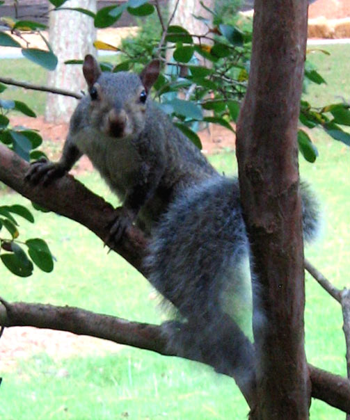 Squirrel_feeder_02
