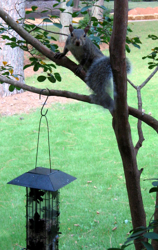 Squirrel_feeder_01