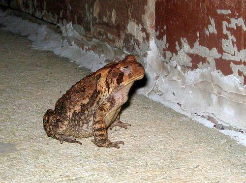 Ol_toad_05