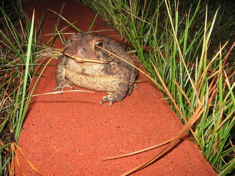 Toad_toadhole_02