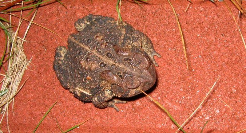 Toad_toadhole_03