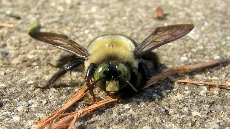 Bee_03
