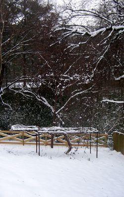 Winter_2011_01