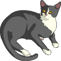 Cat_pic_01