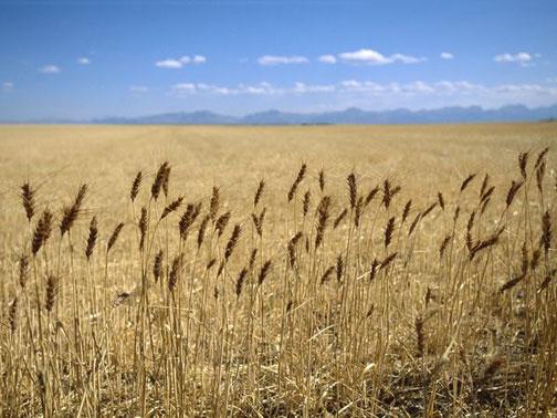 Prairie-grass_Richard_Olsenius