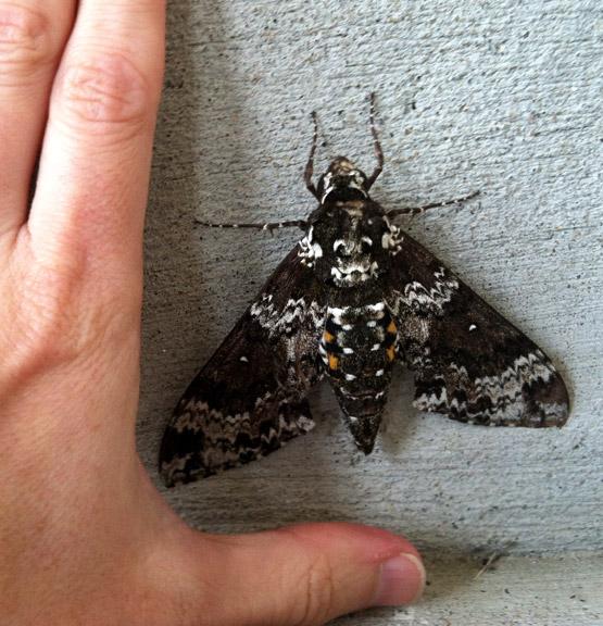 2013_moth