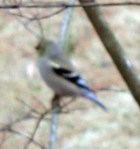 Warbler?