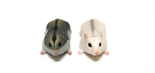Djungarian hamsters: Duo