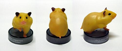 Golden hamster: apricot