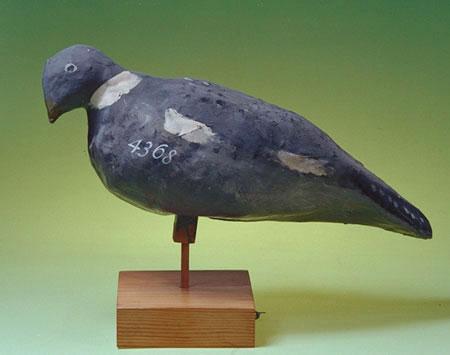 papermache pigeon