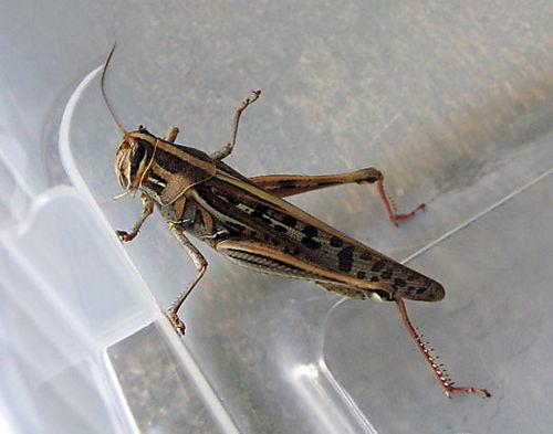 Target, the Grasshopper